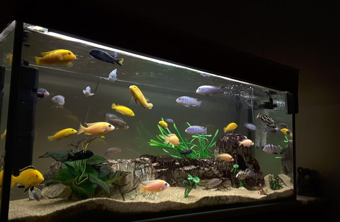 aquarium definition