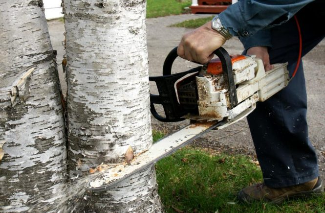 tree removal service cost