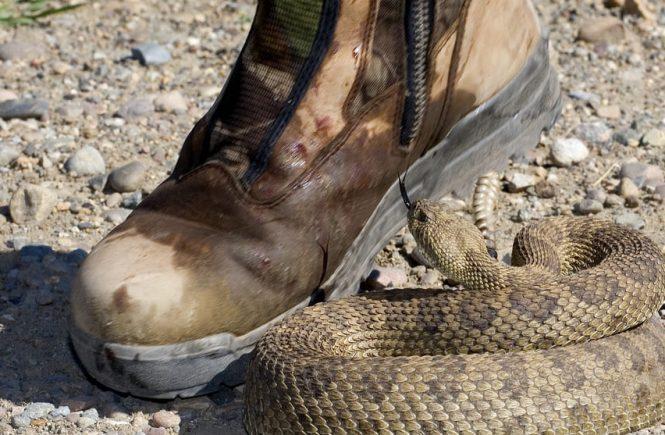sitka snake gaiters
