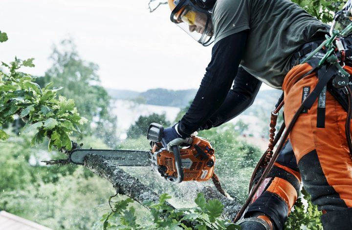 certified arborist salary california