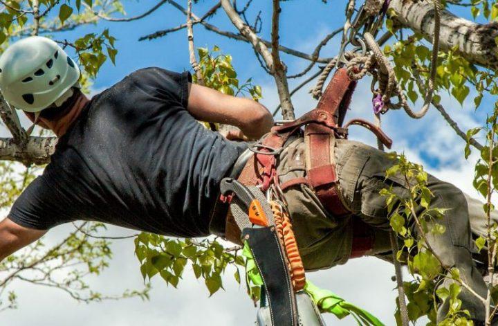 local tree trimmingl companies